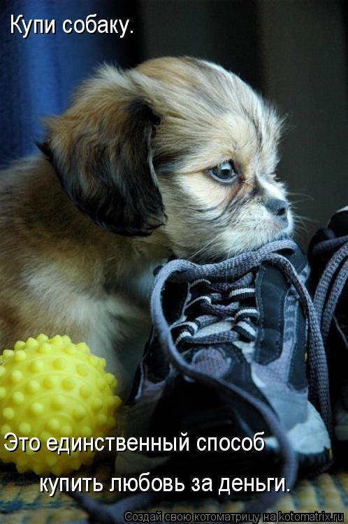Котоматрица: Купи собаку. Это единственный способ  купить любовь за деньги.