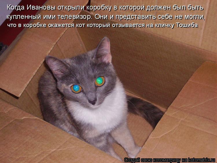 Котоматрица: Когда Ивановы открыли коробку в которой должен был быть  купленный ими телевизор. Они и представить себе не могли, что в коробке окажется ко