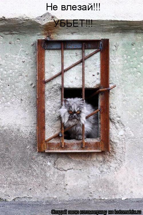 Котоматрица: Не влезай!!! УБЬЕТ!!!