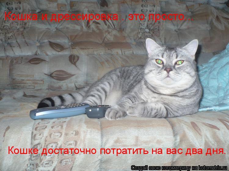 Котоматрица: Кошка и дрессировка – это просто...   Кошке достаточно потратить на вас два дня.