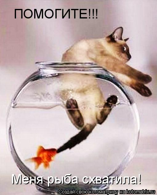 Котоматрица: ПОМОГИТЕ!!! Меня рыба схватила!