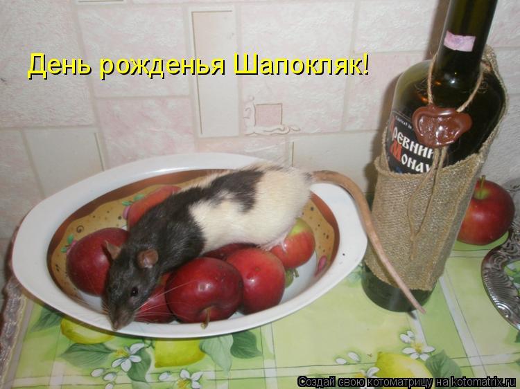 Котоматрица: День рожденья Шапокляк!