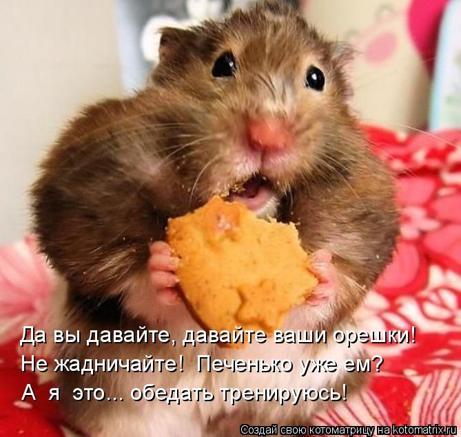 Котоматрица: Не жадничайте!  Печенько уже ем? А  я  это... обедать тренируюсь! Да вы давайте, давайте ваши орешки!