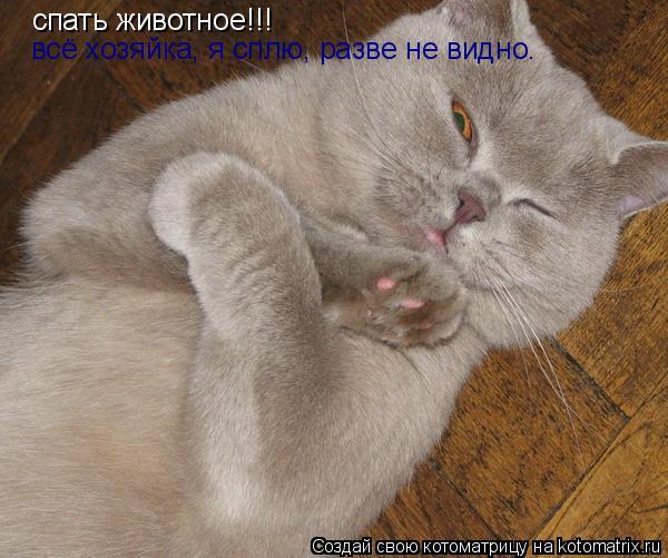 Котоматрица: спать животное!!! всё хозяйка, я сплю, разве не видно.