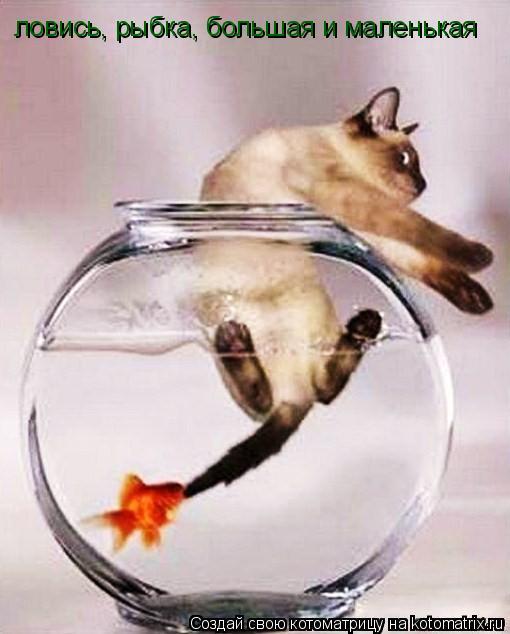 Котоматрица: ловись, рыбка, большая и маленькая