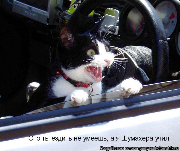 Котоматрица: Это ты ездить не умеешь, а я Шумахера учил