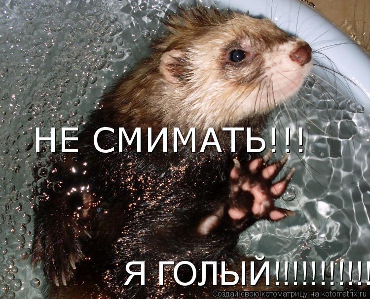 Котоматрица: НЕ СМИМАТЬ!!!  Я ГОЛЫЙ!!!!!!!!!!!!
