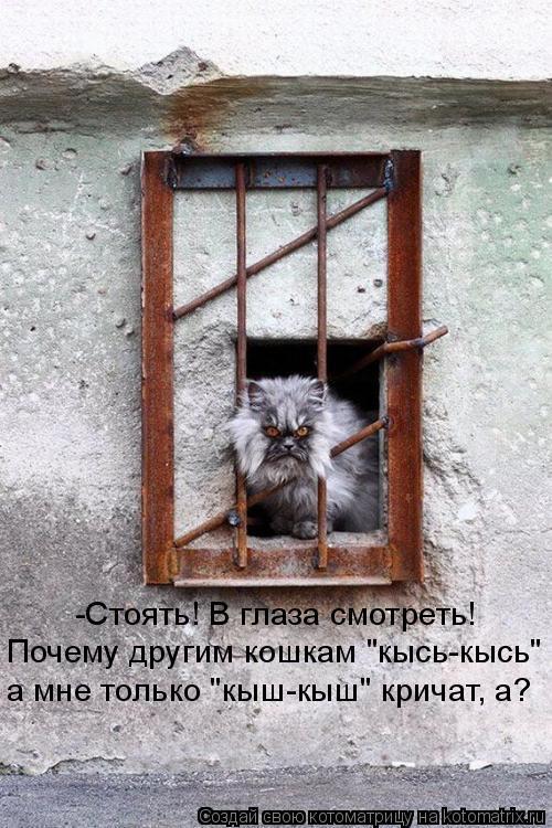 """Котоматрица: Почему другим кошкам """"кысь-кысь""""  а мне только """"кыш-кыш"""" кричат, а? -Стоять! В глаза смотреть!"""