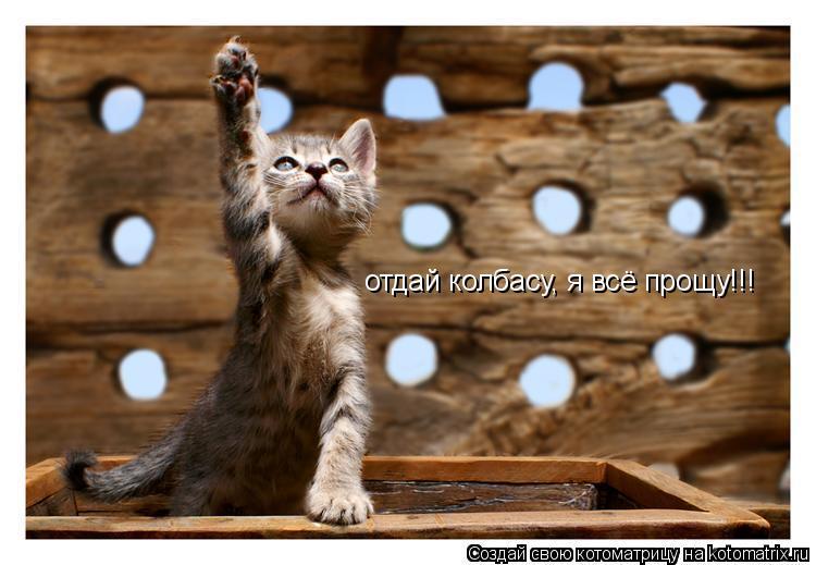 Котоматрица: отдай колбасу, я всё прощу!!!