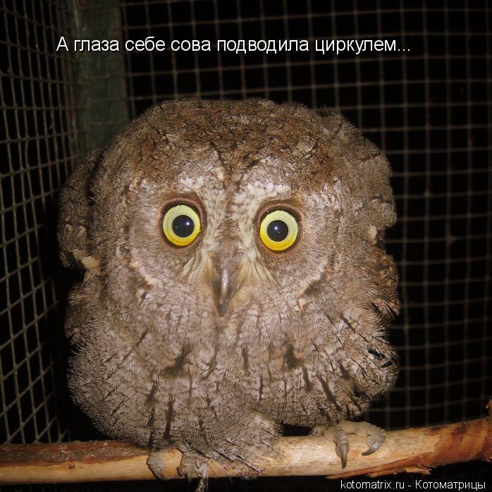Котоматрица: А глаза себе сова подводила циркулем...