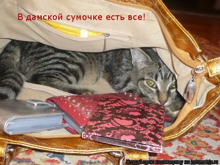 Котоматрица: В дамской сумочке есть все!