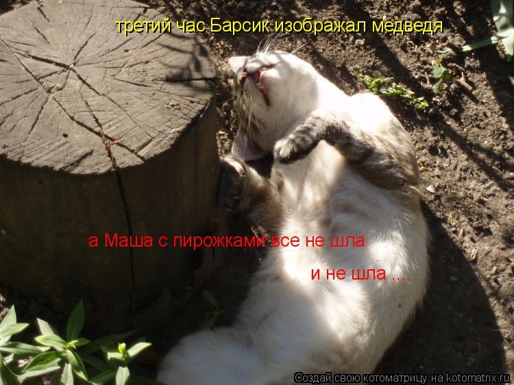 Котоматрица: третий час Барсик изображал медведя а Маша с пирожками все не шла   и не шла ....