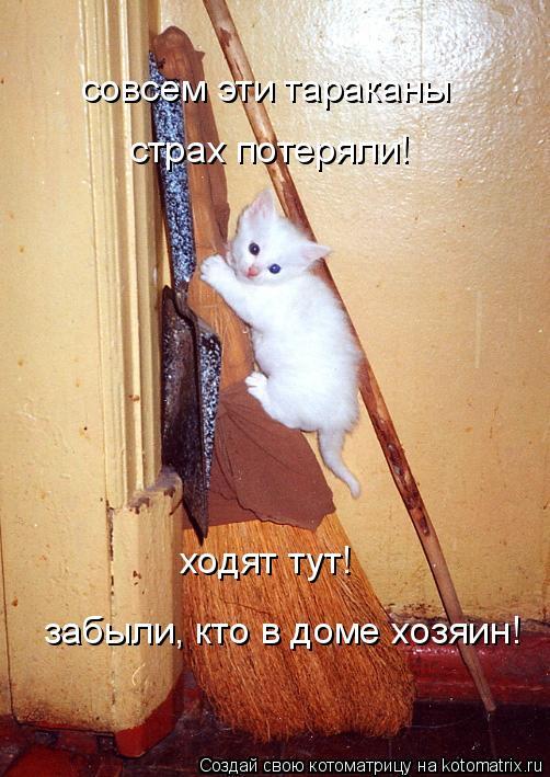 Котоматрица: совсем эти тараканы  страх потеряли!  ходят тут! забыли, кто в доме хозяин!