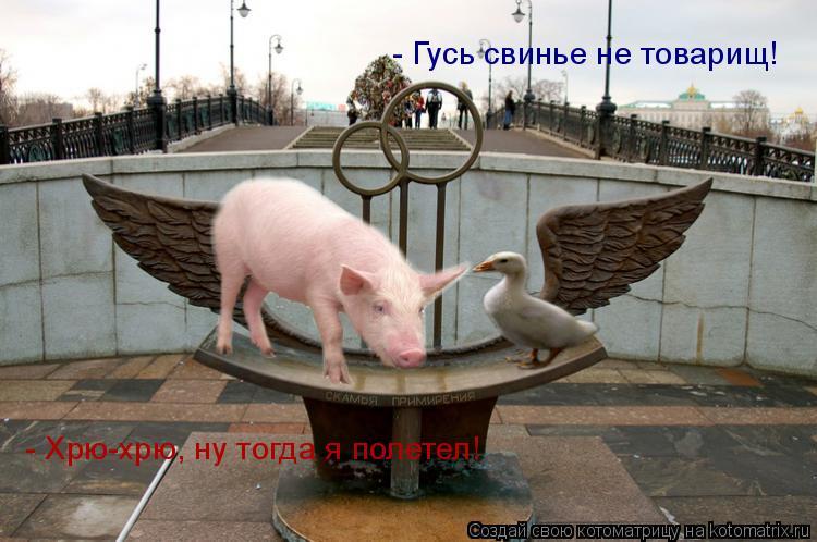 Котоматрица: - Гусь свинье не товарищ!   - Хрю-хрю, ну тогда я полетел!