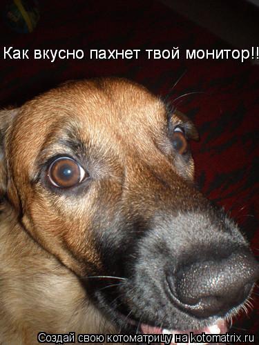 Котоматрица: Как вкусно пахнет твой монитор!!! Как вкусно пахнет твой монитор!!!