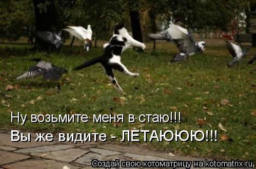 Котоматрица: Ну возьмите меня в стаю!!! Вы же видите - ЛЕТАЮЮЮ!!!