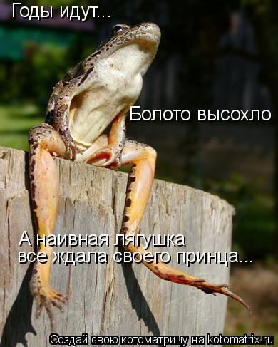 Котоматрица: Годы идут... Болото высохло А наивная лягушка  все ждала своего принца...