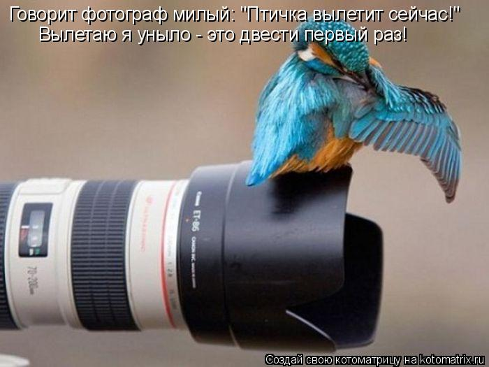 """Котоматрица: Говорит фотограф милый: """"Птичка вылетит сейчас!"""" Вылетаю я уныло - это двести первый раз!"""