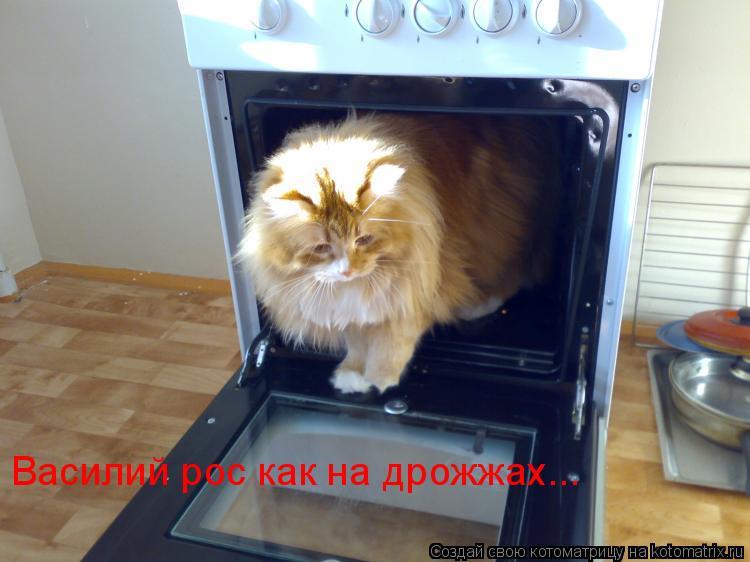 Котоматрица: Василий рос как на дрожжах...