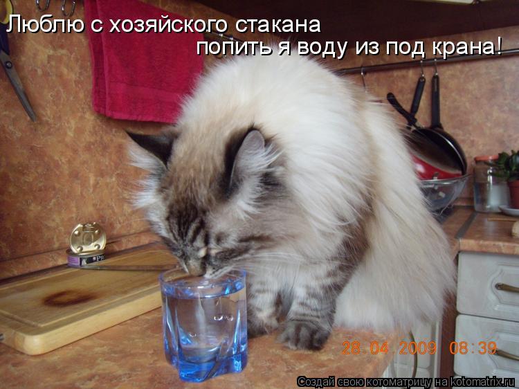 Котоматрица: Люблю с хозяйского стакана попить я воду из под крана!