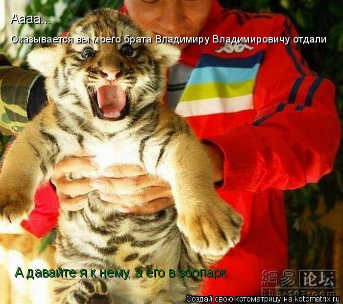 Котоматрица: Оказывается вы моего брата Владимиру Владимировичу отдали Аааа... А давайте я к нему, а его в зоопарк