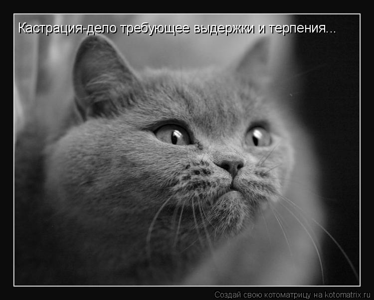 Котоматрица: Кастрация-дело требующее выдержки и терпения...