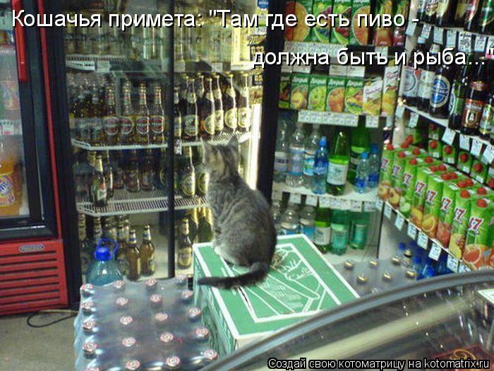 """Котоматрица: должна быть и рыба..."""" Кошачья примета: """"Там где есть пиво -"""