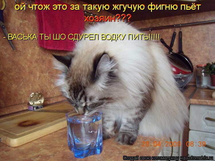 Котоматрица: ой чтож это за такую жгучую фигню пьёт  ой чтож это за такую жгучую фигню пьёт  хозяин??? хозяин??? - ВАСЬКА ТЫ ШО СДУРЕЛ ВОДКУ ПИТЬ!!!!!