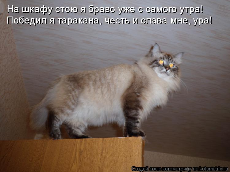 Котоматрица: На шкафу стою я браво уже с самого утра! Победил я таракана, честь и слава мне, ура!