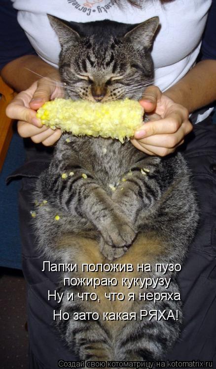 Котоматрица: Лапки положив на пузо пожираю кукурузу Ну и что, что я неряха Но зато какая РЯХА!