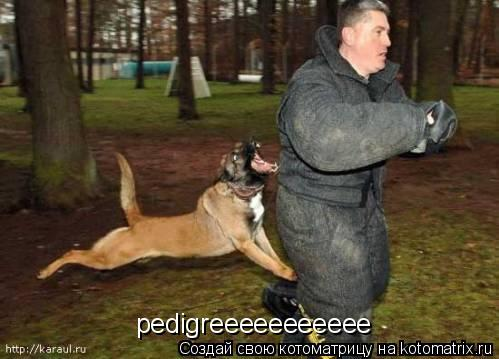 Котоматрица: pedigreeeeeeeeeee