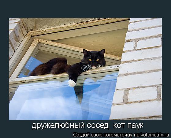 Котоматрица: дружелюбный сосед  кот паук