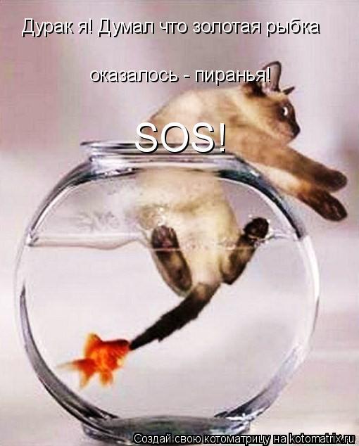 Котоматрица: Дурак я! Думал что золотая рыбка оказалось - пиранья! SOS!