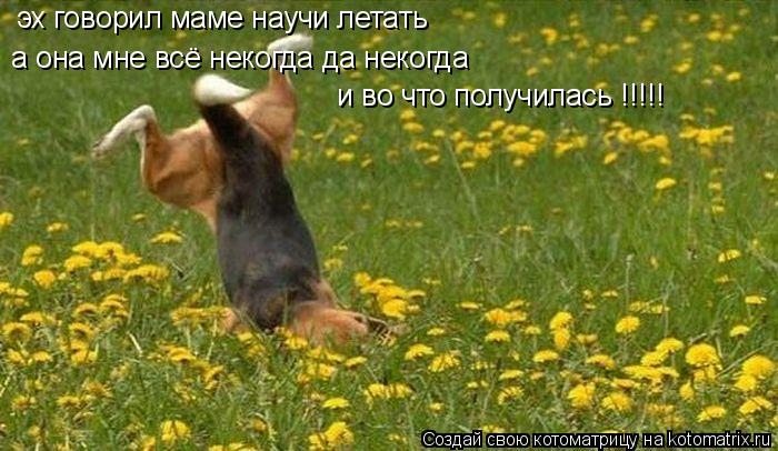 Котоматрица: эх говорил маме научи летать   а она мне всё некогда да некогда   и во что получилась !!!!!
