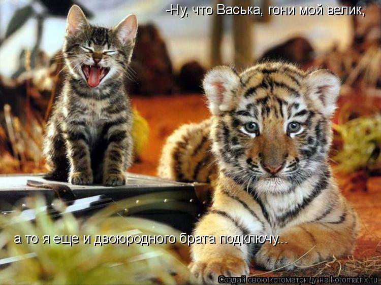 Котоматрица: -Ну, что Васька, гони мой велик, а то я еще и двоюродного брата подключу...