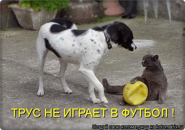 Котоматрица: ТРУС НЕ ИГРАЕТ В ФУТБОЛ !