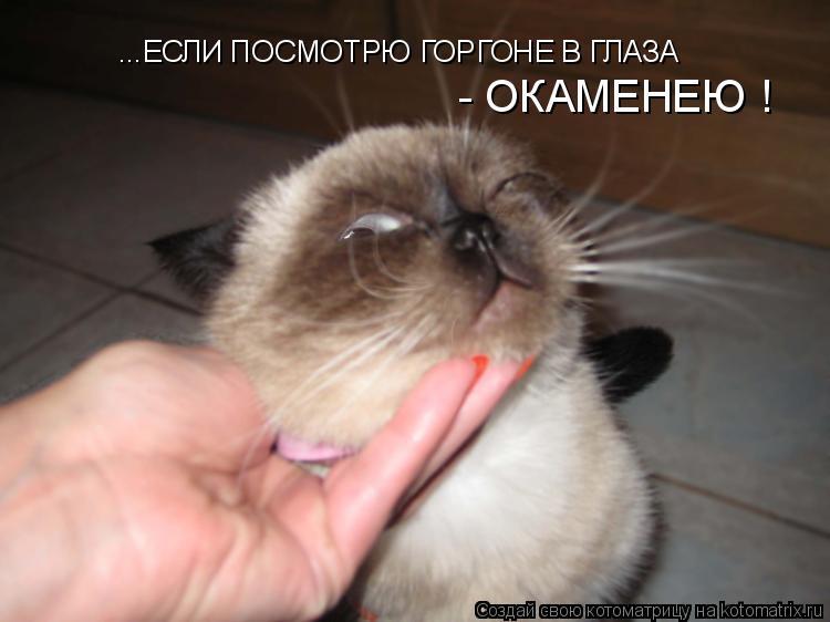 Котоматрица: ...ЕСЛИ ПОСМОТРЮ ГОРГОНЕ В ГЛАЗА - ОКАМЕНЕЮ !