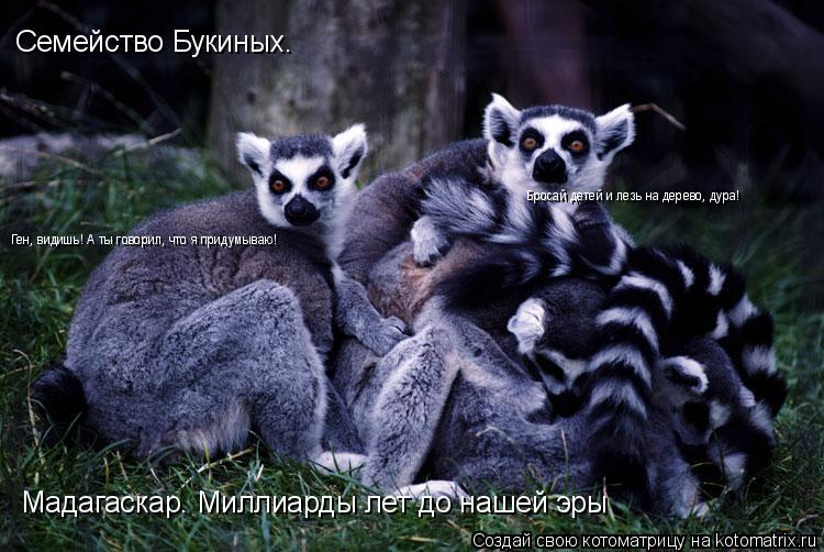 Котоматрица: Семейство Букиных. Мадагаскар. Миллиарды лет до нашей эры Ген, видишь! А ты говорил, что я придумываю! Бросай детей и лезь на дерево, дура!