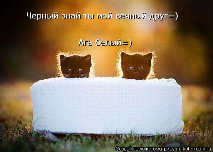 Котоматрица: Черный знай ты мой вечный друг=) Ага белый=)
