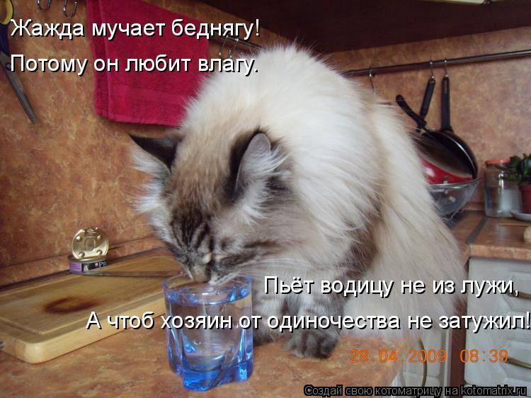 Котоматрица: Жажда мучает беднягу! Потому он любит влагу. Пьёт водицу не из лужи, А чтоб хозяин от одиночества не затужил!