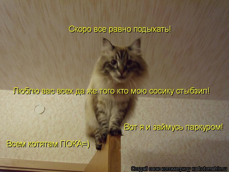 Котоматрица: Скоро все равно подыхать! Вот я и займусь паркуром! Всем котятам ПОКА=) Люблю вас всех да же того кто мою сосику стыбзил!