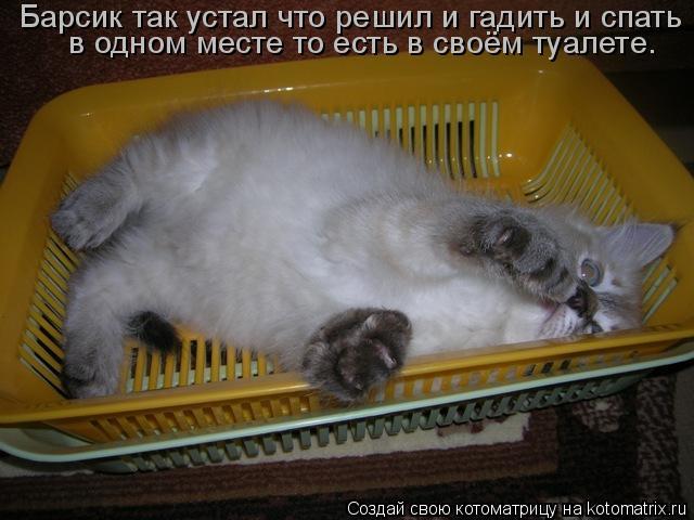 Котоматрица: Барсик так устал что решил и гадить и спать  в одном месте то есть в своём туалете.