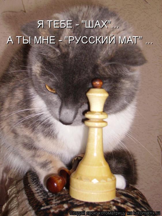 """Котоматрица: Я ТЕБЕ - """"ШАХ""""... А ТЫ МНЕ - """"РУССКИЙ МАТ"""" ..."""