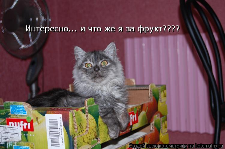 Котоматрица: Интересно... и что же я за фрукт????