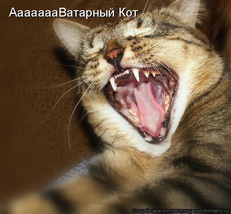 Котоматрица: АааааааВатарный Кот