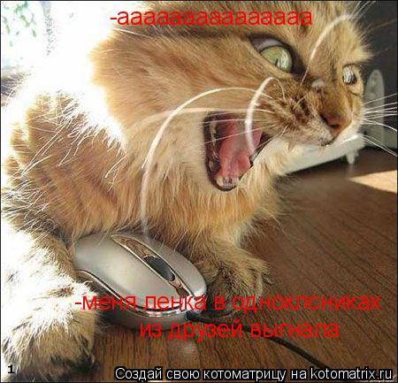 Котоматрица: -ааааааааааааааа из друзей выгнала -меня ленка в одноклсниках