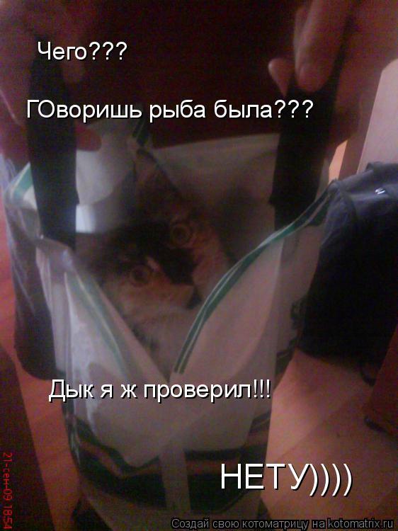 Котоматрица: Чего??? ГОворишь рыба была??? Дык я ж проверил!!! НЕТУ))))