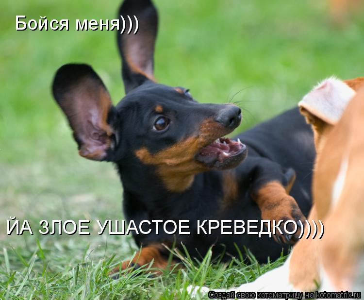 Котоматрица: Бойся меня))) ЙА ЗЛОЕ УШАСТОЕ КРЕВЕДКО))))
