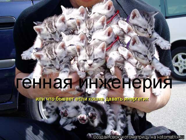 Как вы думаете, сколько котят в руках у этого человека? 37.56 Kб