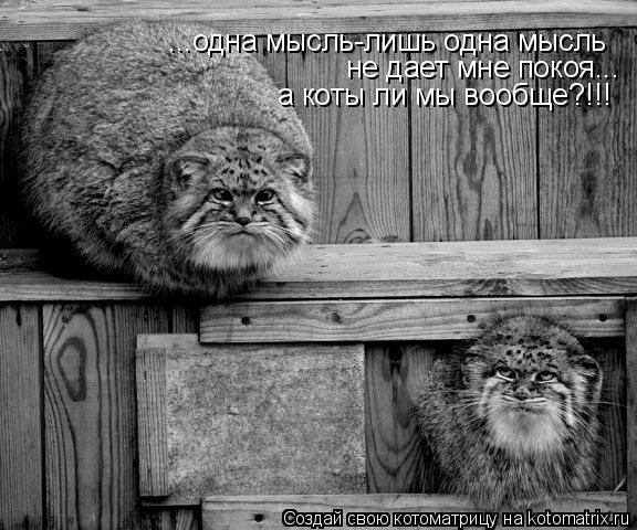 Котоматрица: ...одна мысль-лишь одна мысль  не дает мне покоя... а коты ли мы вообще?!!!